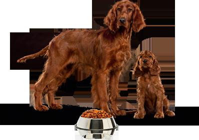 Photo of Vale de 6 Euros para comida para cão Pro Plan