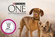 Vale de Desconto Purina One Cão